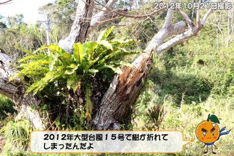 201211_002.jpg