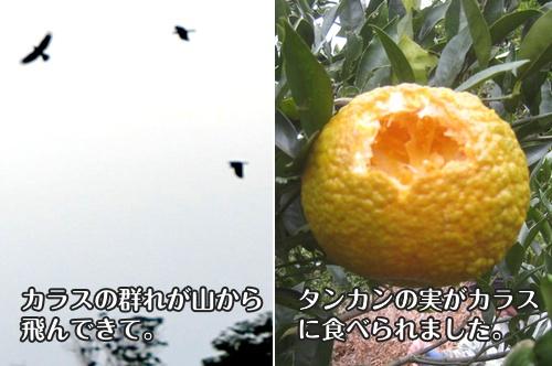 nagamine140123b.jpg