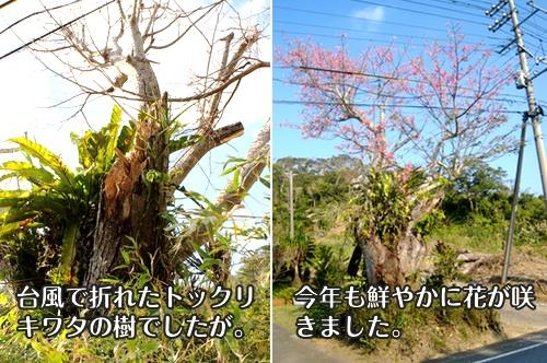 nagamine140123c.jpg