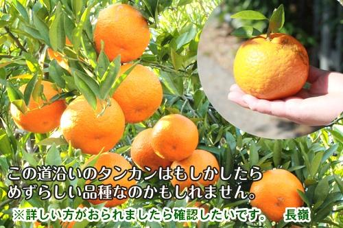 nagamine140123e3.jpg