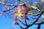 タンカン20101121_09